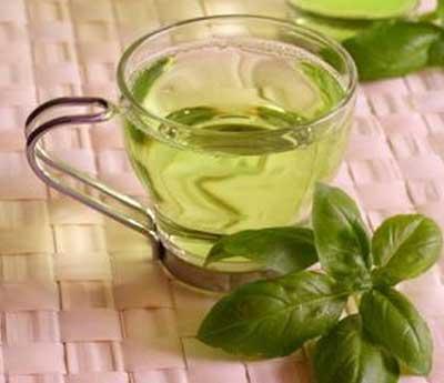 receitas e dicas do chá de oliveira