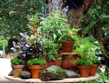 como cultivar em casa