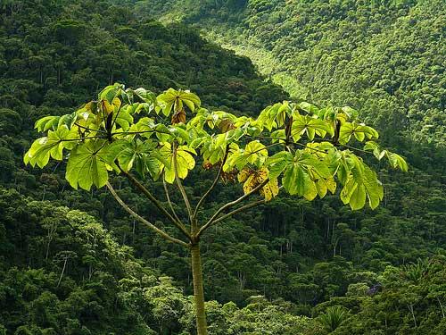 da árvore